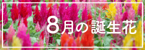 8月の誕生花