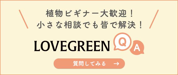 植物の悩みならLOVEGREEN(ラブグリーン)のQ&A