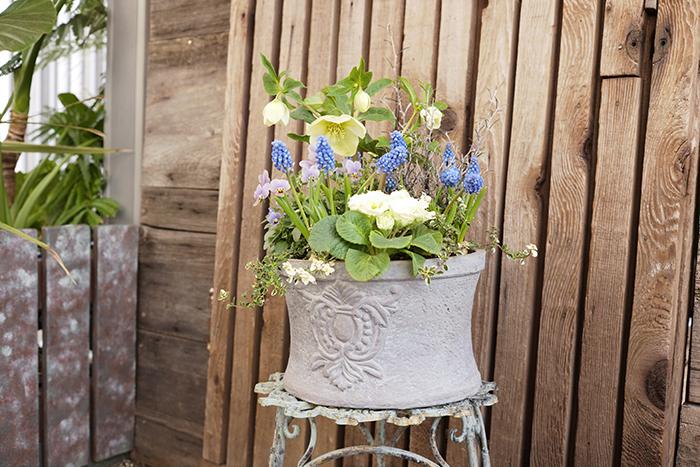 完成、気温が低い時期なので長く花を楽しめるのも嬉しい。