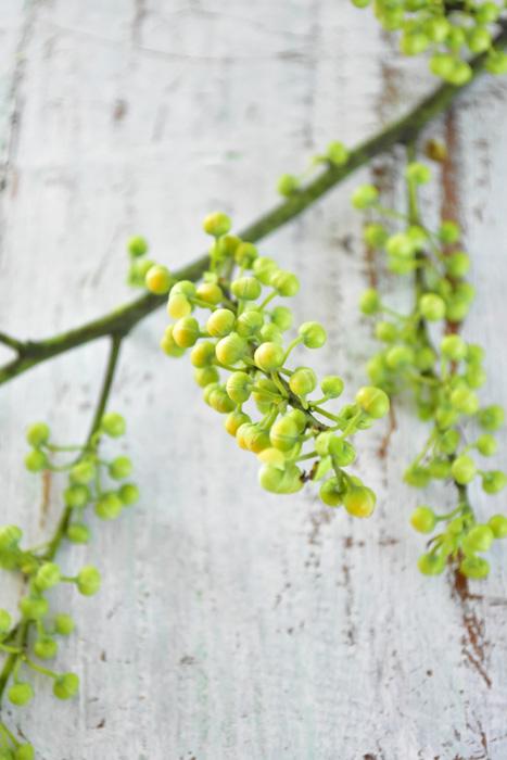 アオモジは葉より先に花が咲くタイプの落葉樹。葉っぱはちょうど一番花が咲くころに芽吹いてきます。生けていると、一番花、芽吹きなど、春の訪れを感じさせてくれる枝ものです。