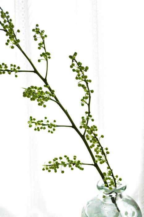 アオモジはクスノキ科の落葉樹です。アオモジという名前の他に、「ショウガの木」という別名もあります。また、地域によっては「卒業花」という名前で呼ばれる場合もあり、これはアオモジの開花時期がちょうど卒業式のころの3月に咲き誇ることからだそうです。  生花の流通名はアオモジ。年末から2月頃に出回る枝もの花材で、お正月の花あしらいや、春を表現する生け花などにもよく使われています。