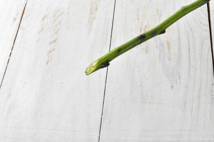 枝は一文字か十文字に 細い枝については、一般的な花を切るときのように枝を斜めに切って生けます。これは切り口の断面積を広げて、できるだけたくさんの水を吸い上げさせるためです。  アオモジは水揚げがよいのでこれだけでも十分ですが、細めの茎は一文字、太い枝は十文字に切れ込みを入れると、より水の吸い上げがよくなります。