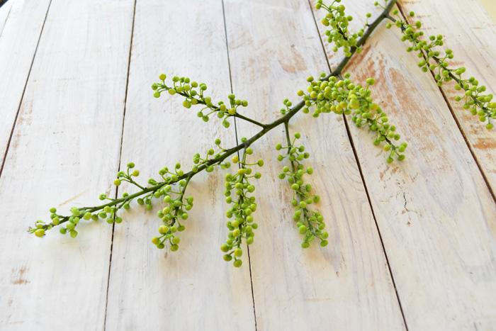 アオモジは季節感のあるインテリアとしてもとてもおすすめです。長持ちしてつぼみから開花まで長く楽しめ、春の訪れも感じさせてくれます。お部屋に飾ってみませんか。