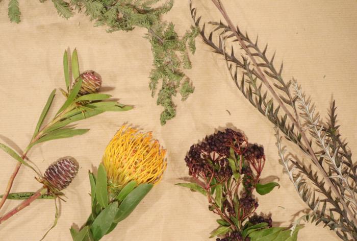 ピンクッションから右に ・トキワガマズミ ・ビバーナムティムス ・ミモザ ・リューカデンドロン  今回、用意したお花は、花持ちがいいピンクッションに合わせて長持ちする花材を揃えました。  ミモザやビバーナムティムスは、風に揺られていそうなやわらかいイメージ。  グレビレアやリューカデンドロンは野草なイメージに。ちなみに、グレビレアはアフリカから来た植物です。