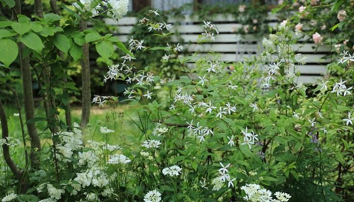 今は自宅の庭は植え替えは全くしない。足したりもしない。全部宿根草と多年草でできているので。何かが枯れてもグランドカバーでカバーできるんです。宿根草と多年草は冬になると地上部が枯れてしまうのですが、雪が隠してくれるので気にならないんですよね。雪がない地域は地上部が枯れてると目立つってしまうため、東北だからこのやり方が出来る、ということでもあるのですが・・・