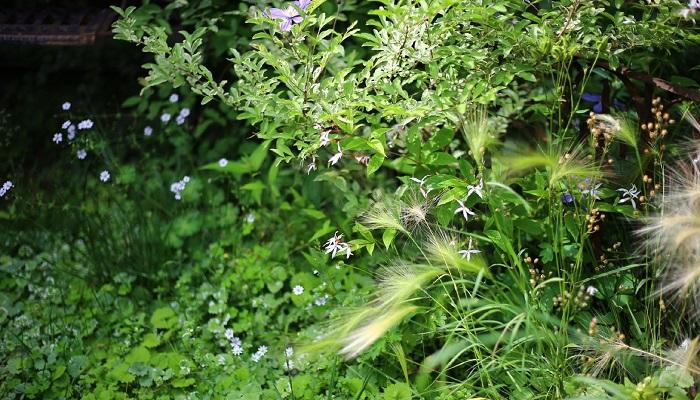 寄せ植えに使った植物が庭のあちこちにはびこって「なんか多いな~?」と思ったりします。ドクダミもいっぱい出ちゃうと大変だけど、ちょっと隅のほうに生えてたりすると「あ、かわいいな」って新しいかわいさに気が付いたり。