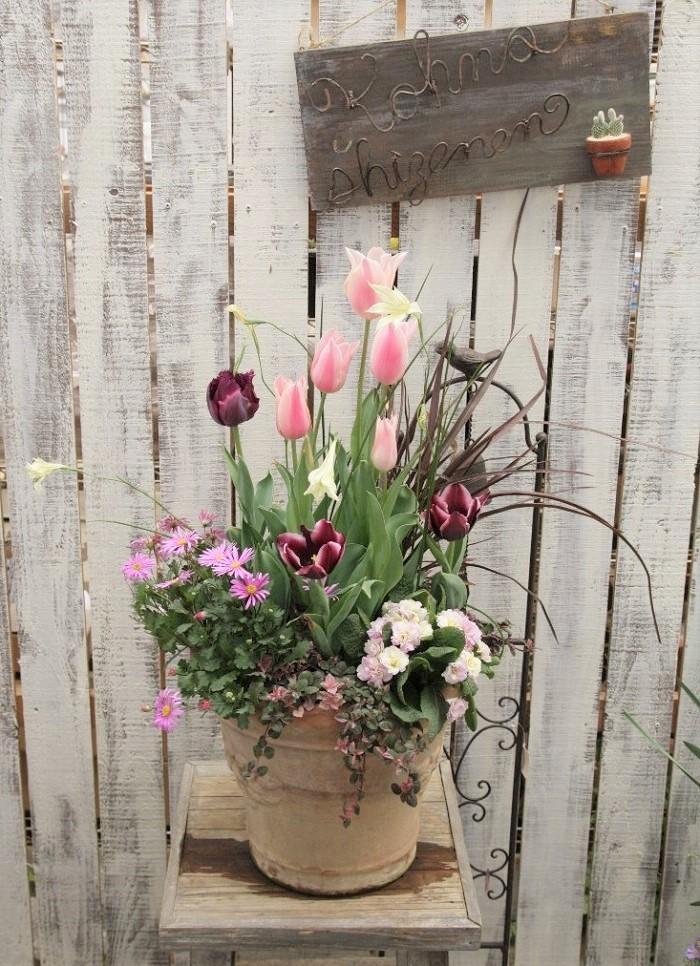 寄せ植えのポイント  ピンク系の濃淡にシックな赤黒で引き締め、甘いだけにならないように植えた寄せ植えです。  11月にチューリップと春咲グラジオラスを植え込み寄せ植えを作りました。  寄せ植えに使った球根  写真真ん中の淡いピンク色のチューリップが「サンネ」、写真手前の濃い紫色のチューリップが「ジャックポット」、写真真ん中のラッパ状の白い花が春咲グラジオラス「トリステス」です。  その他の植物名  写真左から手前に、ブラキカム、リシマキア「シューティングスター」、八重咲ジュリアン、ニューサイラン「サーファーブロンズ」を植えました。