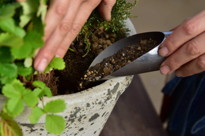 Botapii, ボタピー, 間室みどり, クリスマス, 冬の寄せ植え, 寄せ植え, 赤色の寄せ植え, かわいい寄せ植え
