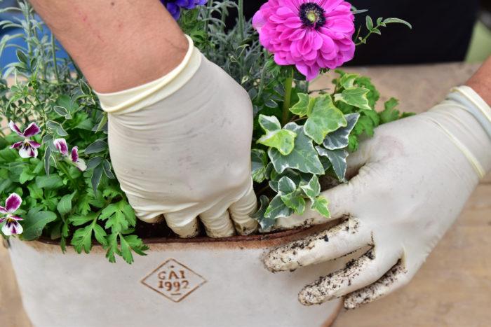 5.斑入りジャスミン、ヘデラは鉢の外に垂らす以外にも、植えた花に形をつけるように絡ませても良い。