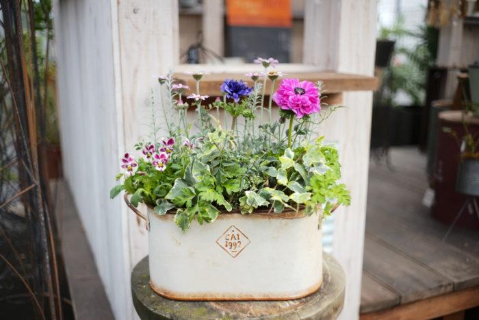 完成!たくさんの花や葉物が寄り合った可愛らしい寄せ植えの出来上がり。