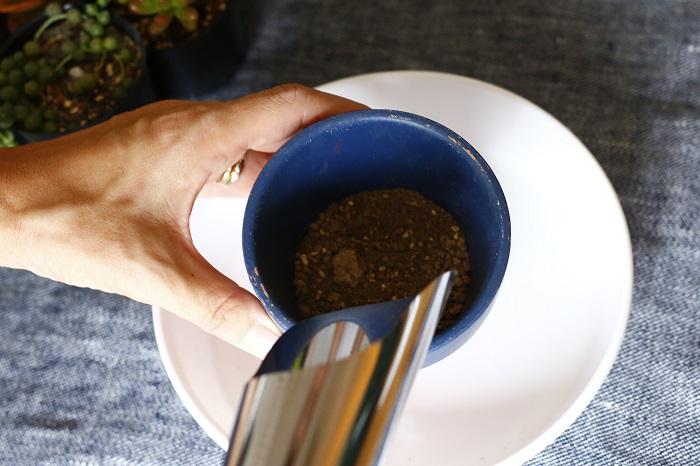 鉢の半分くらいまで土を入れます。