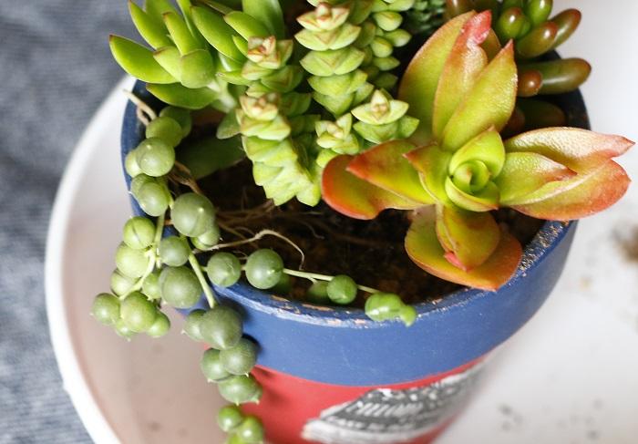グリーンネックレスの1つは、後ろから前に流れるように植えます。