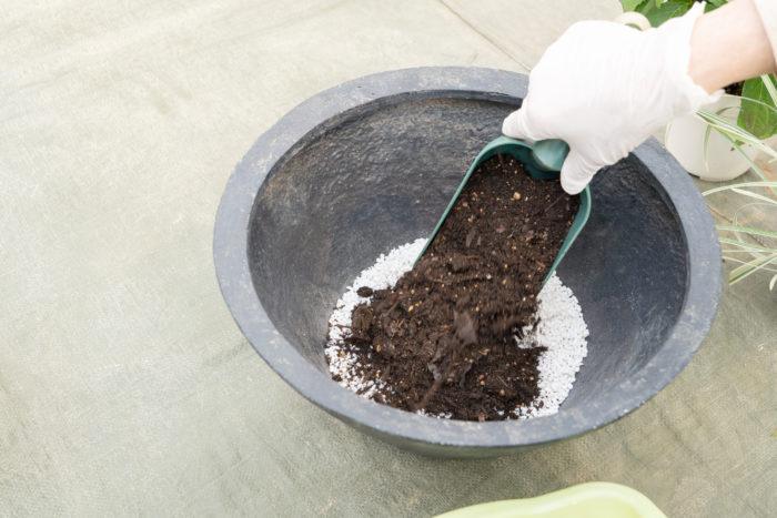 1.  鉢底ネットを敷いた器に、鉢底石の代わりとして細かめのパーライトを器の高さの1/5ほど入れます。その上に培養土を入れていきます。