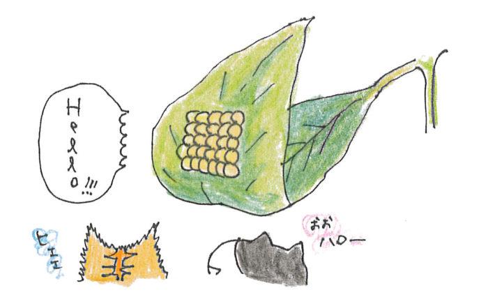 葉の裏に害虫の卵が産みつけられていませんか?
