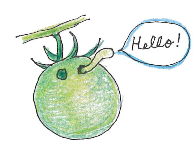 ガの仲間で「タバコガ」という虫の幼虫が実を食べたかもしれません。たった1匹でも放置すると次々被害が広がります。穴が開いたミニトマトは実ごと取り除きましょ