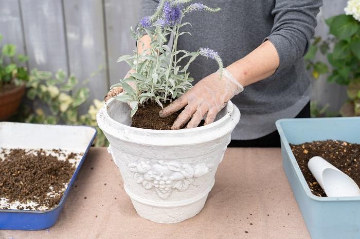 鉢に鉢底ネット、鉢底石、土を入れ、一番背の高いベロニカを後方中心に植えていきます。