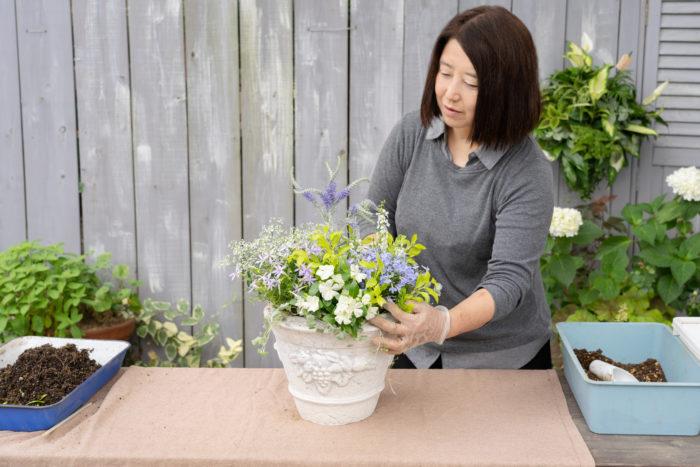 最後に、苗と苗の間にしっかりと土を入れます。土を入れる作業だけに集中してしまうと、苗がうもれてしまったり、土を入れる前と後で、全体の雰囲気が変わってしまうことがあります。土を入れながら、苗が同じ高さになるよう株元をチェックし、苗をふんわりとひろげてあげながら完成させましょう。  完成後は、活力剤を入れた水をたっぷりと与えます。根を大きくくずした場合は、半日陰で様子を見た後に日なたへ移しましょう。長く楽しむために、花がら摘みも忘れずに。