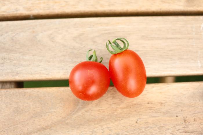 こんなふうに真っ赤に完熟したミニトマトは、甘くてとっても美味しい。  ▼あなたのミニトマトは甘いですか?それともすっぱい?  甘いミニトマトの収穫のことならコチラの記事をご覧ください。