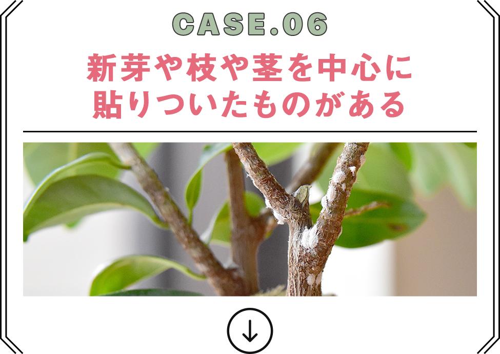 CASE.06 新芽や枝や茎を中心に貼りついたものがある