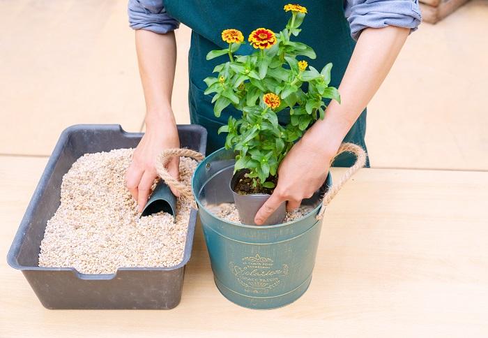 水やりの際に土が流れ出ないように、ウォータースペース2cmを確保できる高さまで土を入れます。