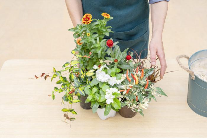 まず、どのように植えるか、配置を考えます。基本的に背の高いものは後ろへ、低いものを前へ植えます。