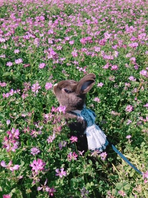 お花畑でお散歩するショコラちゃん。絵本の中の世界みたい!