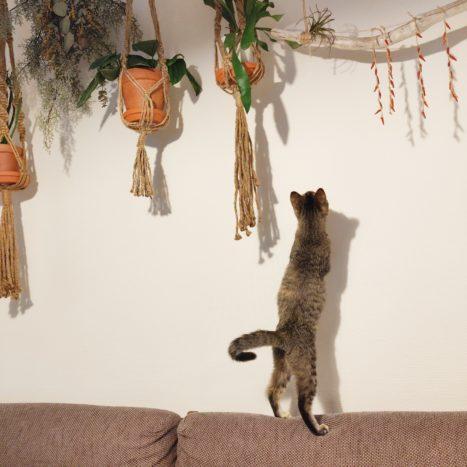 吊り下がった唐辛子が気になっているようです。
