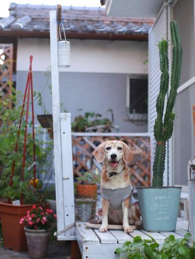 犬も植物も大切な家族。一緒に記念撮影して成長を保存♪