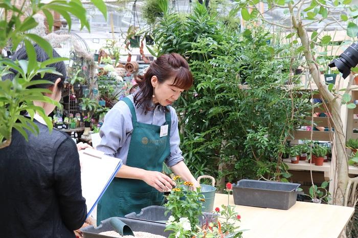 今回は、プロトリーフガーデンアイランド玉川店を訪れ、垂井愛さんに寄せ植えを教わりました。「植物の可愛さが生きた寄せ植えを作って楽しんでもらえると嬉しい。」と言う垂井さん。随時ワークショップも開催されているそうなので、興味のある方はぜひ参加してみてはいかがでしょうか。プロトリーフガーデンアイランド玉川店に直接お問い合わせください。  人気のエアプランツをはじめ、種類豊富な季節の花苗や観葉植物が楽しめるお店もとても魅力的です。お立ち寄りください。