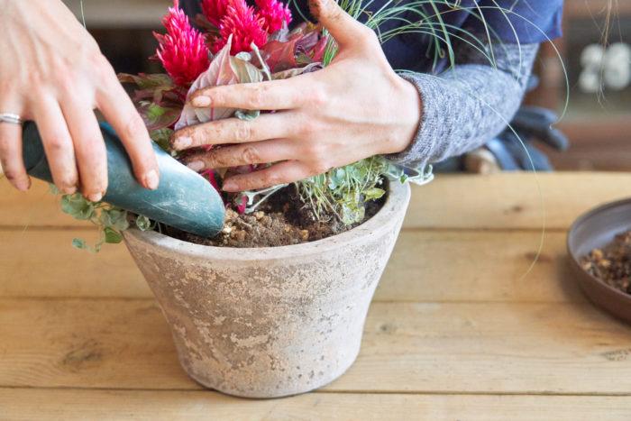 最後に、植物を優しくかき分けて土を入れます。苗と苗の間を指で軽くつっつきながら、土が全体に入っているか確認しましょう。
