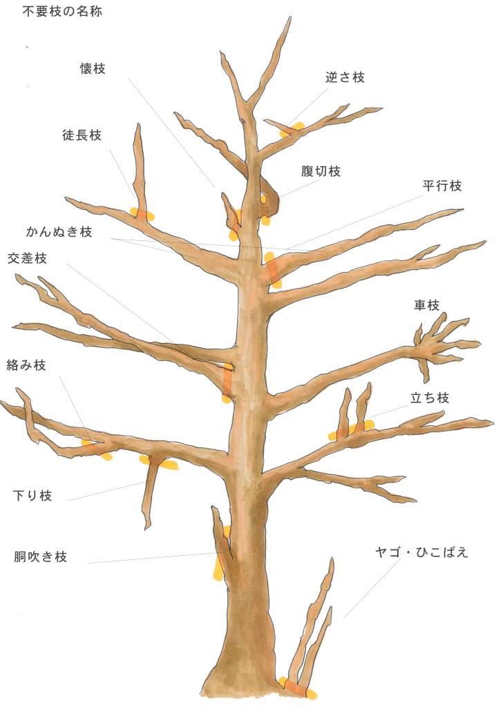 画像左上から、反時計周り順で説明します。  ①懐(ふところ)枝  幹付近から伸びた枝。日が当たりにくく、空気もこもりがちなため、害虫の温床になりやすい。  ②徒長枝  枝から真上に伸びすぎてしまった枝。雨風などで折れやすいことと、害虫の温床になりやすい。  ③かんぬき枝  主幹をかんぬきのように横に貫いて左右対称に生えている枝。全体の樹形のバランスを見ながら、左右どちらかを剪定する。  ④交差枝  他の枝と交差してしまっているもの。樹形を考慮して、不要な枝を剪定することが必要。  ⑤からみ枝  その名のとおり、枝が絡み合ってしまっているもの。  ⑥下がり枝  垂れ枝ともいい、横に伸びた枝から下に向かって伸びている枝。  ⑦胴吹き枝  幹吹きともいい、幹の根元付近から上に伸びた枝。樹木の上部分に栄養がいかなくなってしまうため、早めの選定が必要です。  ⑧ヤゴ・ひこばえ  樹木の根元から生えてくる枝。樹形の見栄えが悪くなるとともに、胴ふき枝同様、樹木の上部分に栄養がいかなくなってしまう。また、躓きやすくなる。  ⑨立ち枝  通常横に広がるはずの枝がまっすぐ伸びてしまったもの。樹形に悪影響があります。  ⑩車枝  枝の一部分から多数の枝が出ているもので、車輪状に枝が伸びているもの。  ⑪平行枝  複数の枝が平行に伸びてしまっている枝。そのままにしておくと下の方の枝の日当たりが悪くなってしまう。  ⑫腹切枝  幹と交差する太い枝のことを言います。  ⑬逆さ枝  幹に向いて生えてしまっているもの。