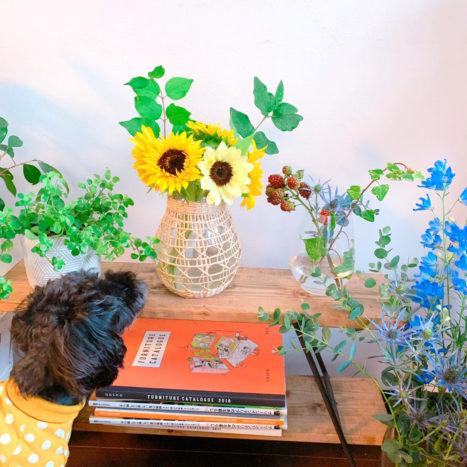 太陽のようにお花を明るくするヒマワリ。ワンちゃんのお洋服とお揃いの色ですね。
