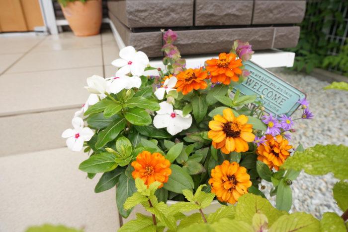 カラフルな夏花の寄せ植え。真似したい!