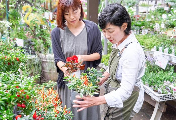 今回は、飯塚園芸さんの球根ベゴニア(フォーチュンベゴニア・虹色フォーチュンベゴニア)を主役に、3ポットで作る秋の寄せ植えの組み合わせを紹介してもらいました。秋が深まるほどに美しく咲くフォーチュンベゴニアや虹色フォーチュンベゴニアを使って、秋ならではの寄せ植えを作ってみてはいかがですか。 苗売り場で3ポットの組み合わせをあれこれ考えるのはとても楽しい時間です。苗が豊富にそろっているお気に入りの園芸店を見つけて出かけましょう!