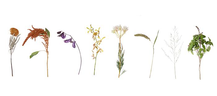 今回は8種の花材を使用しました。  左から  ドライアンドラ ケイトウ(ホットビスケット) ドリコスルビー オンシジウム セルリア アワ パニカム アフリカンブルーバジル