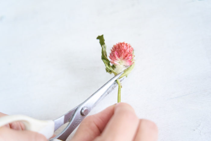 3.ドライフラワーは茎を1cmほど残して切る茎は斜めに切ると挿しやすい。