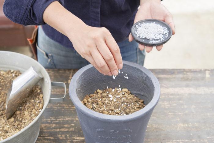 鉢に鉢底用ネットを敷いて土を入れた後に、花つきをよくするためリン酸が入った草花用肥料を3つまみ入れてまんべんなく混ぜます。
