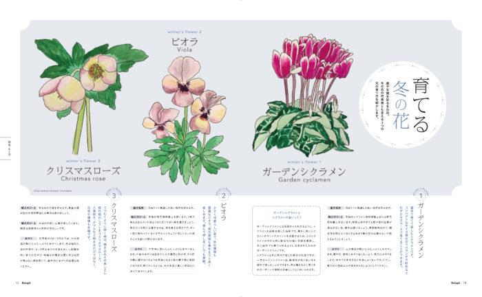 冬の花の育て方