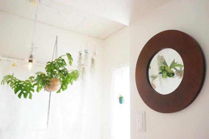 丸いココヤシの鉢がすごく可愛いです!陽の光が綺麗に入って、ハンギングプランツの置き場にベスト!