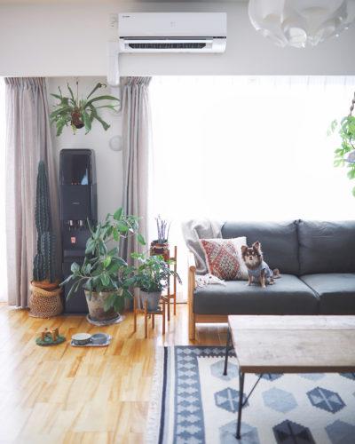 植物の置き方を参考にしたい!色が統一された室内はリラックスでき、チワワの茶々丸ちゃんも嬉しそう♫