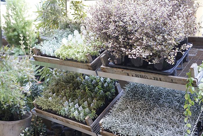 庭木や小さめの草木をはじめ、人気のオーストラリアプランツが並びます。