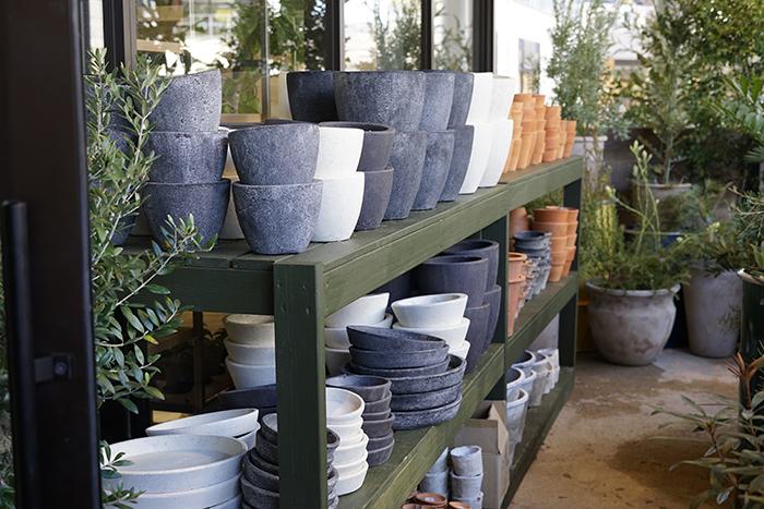 屋外 植木鉢