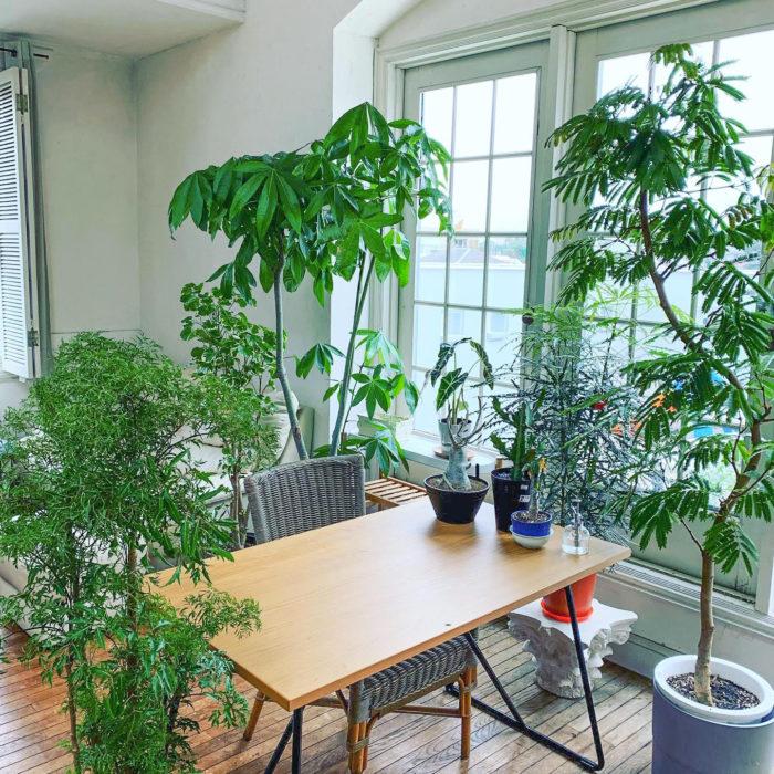 森のようなテーブル周り。塊根植物やユーフォルビアなどさまざまな観葉植物に囲まれています。ご飯がより一層美味しく感じそうですね。