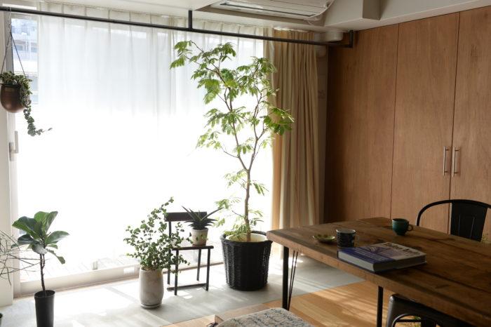 今回の表紙、特集ページは編集部メンバーの自宅で撮影。日当たりが良く、植物がいきいきとしていました。