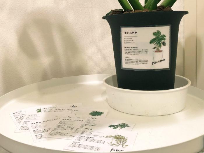 さらに特集最後には定番植物の育て方をまとめた、切り取って使えるミニ観葉植物図鑑も。手帳に張ったり、ラベルのようにして鉢につけたり……ご自身でアレンジして使ってください!