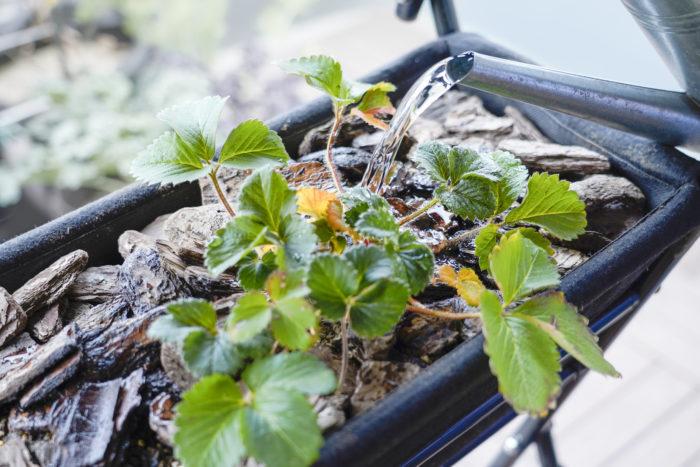 マルチング(略称:マルチ)とは、植物の根元をバークチップなどの資材でおおうことの総称です。
