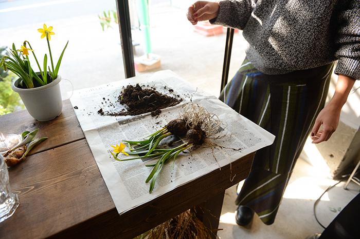 根を痛めないように株分けし土を落とし、綺麗に洗います。