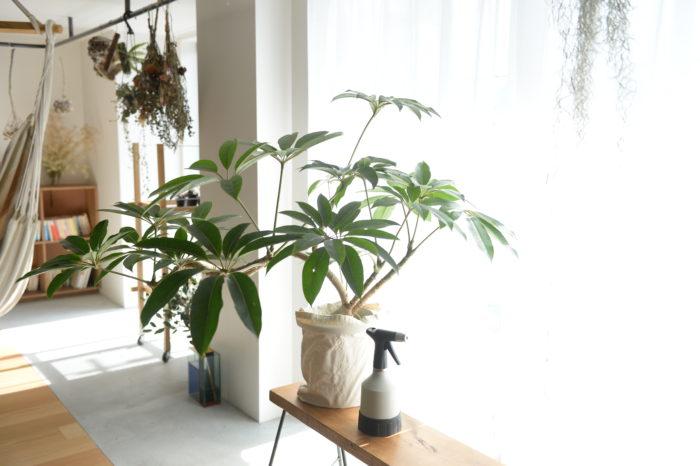 観葉植物をこれから育てたい方必見!1鉢からはじめられる植物の素敵な空間づくりも紹介。少ない鉢数でもバランスよく配置できれば素敵な空間は作れちゃいます!