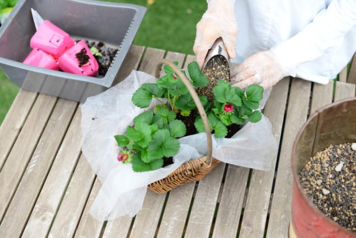 苗を配置したら野菜用の培養土を入れて、植え込んでいく。ウォータースペースをバスケットの縁から1cm程度残して、用土を入れます。
