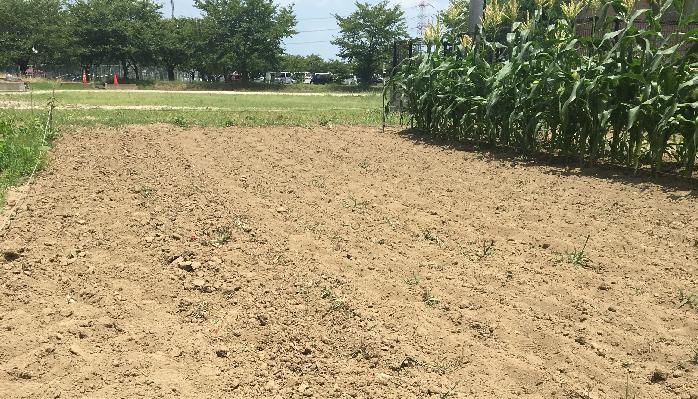 では、ご自宅の土の状態を把握した土壌改良をしてみましょう!